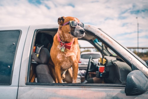 Nationwide to honor the most unusual pet insurance claim of 2019