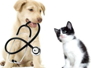 Pet Insurance - Is It Worth the Money?